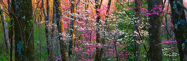 USA, Virginia, Shenandoah National Park