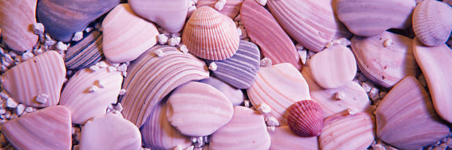 Close-up of seashells