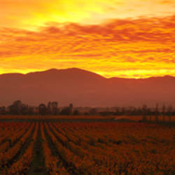 Sunset, Napa Valley, California, USA