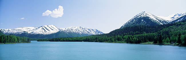 Forest at the riverside, Kenai River, Kenai Peninsula, Alaska, USA