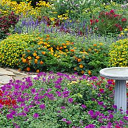 Armchair In A Garden