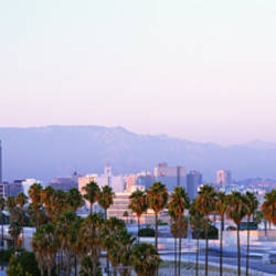 Palm Trees, Cityscape, Los Angeles, California, USA