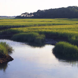 Salt Marsh Cape Cod MA USA