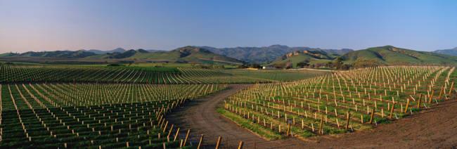 Vineyards Santa Ynez Valley CA