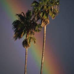 Rainbow Behind Palm Trees