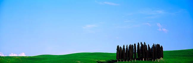 Cypress Trees Tuscany Italy