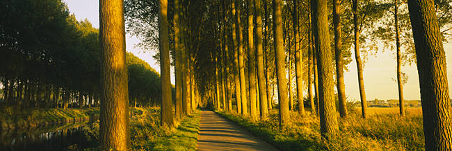 Trees on both sides of a path, Brugge, Belgium