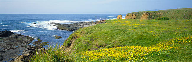 Wildflowers on a cliff near an ocean, Marin Headlands, Westport, California, USA
