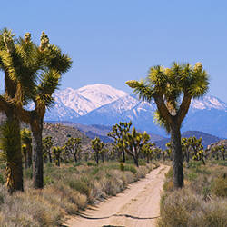 Dirt road passing through a landscape, Queen Valley, Joshua Tree National Monument, California, USA