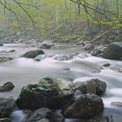 River flowing through the forest, Little Pigeon River, Great Smoky Mountains National Park, Tennessee, USA