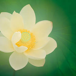 Details of a flower, Ichikawa, Chiba Prefecture, Japan