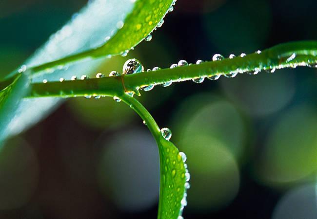 Dew drops on a twig