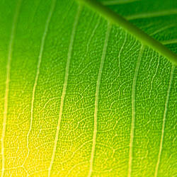 Close-up of a leaf