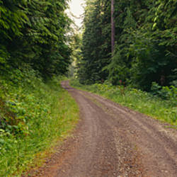Road passing through a forest, Olympic National Park, Washington State, USA