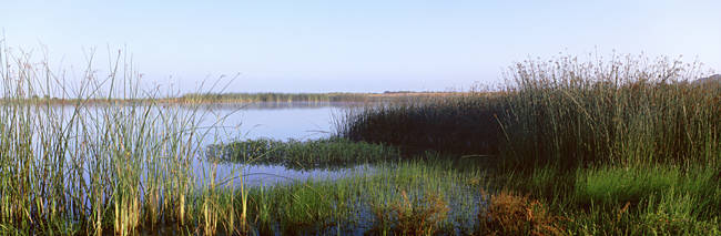 Pond, Half Moon Bay, California, USA