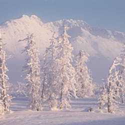 Snow Covered Landscape, Hoarfrost On Trees, Chugach Mountains, Alaska, USA
