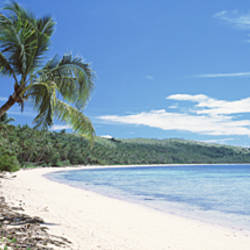 Palm trees on the beach, Nananu-i Ra Island, Fiji