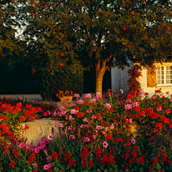 Flowers in a formal garden, Saint Martin Le Beau, Indre et Loire, Loire Valley, France