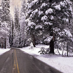 Road Yosemite National Park CA USA