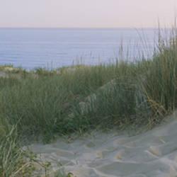 Grass on a sand dune, Indiana Dunes National Lakeshore, Indiana, USA