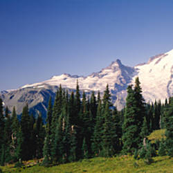 Low angle view of mountains, Mt Rainier, Washington State, USA