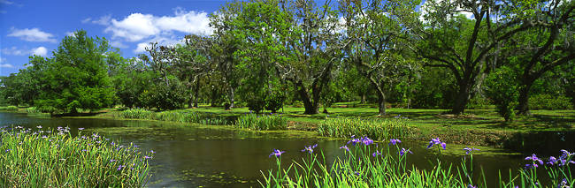Trees in a garden, Jungle Gardens, Avery Island, Louisiana, USA