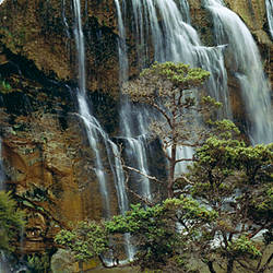 Waterfall in a forest, Waihi, North Island, New Zealand