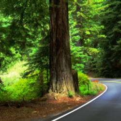 Road Redwoods Mendocino County CA USA