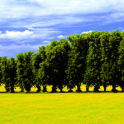 Row Of Trees, Uppland, Sweden