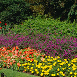 Flowers in a park, Hyde Park, London, England