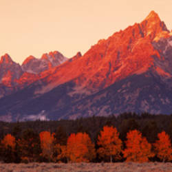 Aspens, Teton Range, Grand Teton National Park, Wyoming, USA