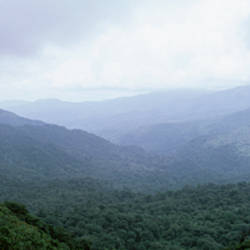 Trees on mountains, Puntarenas, Costa Rica, USA