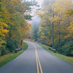 Trees along a road, Blue Ridge Parkway, North Carolina, USA