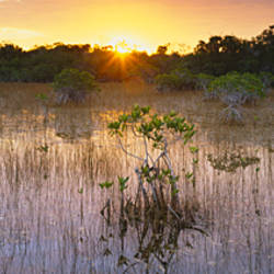 Sunrise over a pond, Everglades National Park, Florida, USA