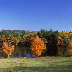 USA, New Hampshire, Hancock, Norway Pond, Tree in autumn