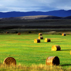 Haystacks, Field, Jackson County, Colorado, USA