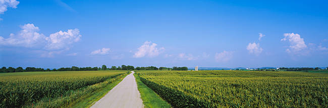 Road along corn fields, Jo Daviess County, Illinois, USA
