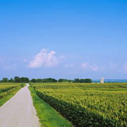 Road along corn fields, Jo Daviess County, Illinois, USA