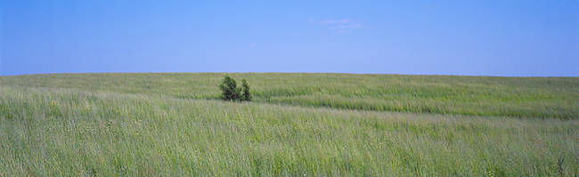 Prairie grass in a field, Iowa, USA