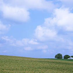 Panoramic view of a landscape, Marshall County, Iowa, USA