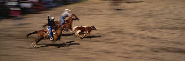 Two cowboys roping a cow, Washington State, USA