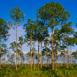 Trees on a landscape, Everglades National Park, Florida, USA