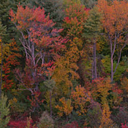 High angle view of trees in a forest, Mohawk Trail, Massachusetts, USA
