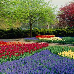 Flowers in a garden, Keukenhof Gardens, Lisse, Netherlands