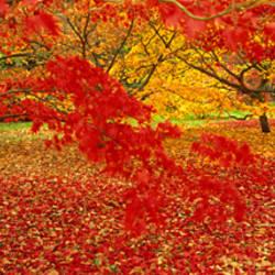 Westonburt Gloucestershire England