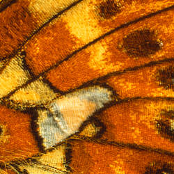 Details of a Butterfly's wing