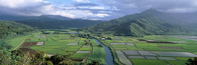 Rice Fields, Hanalei Valley, Kauai, Hawaii, USA
