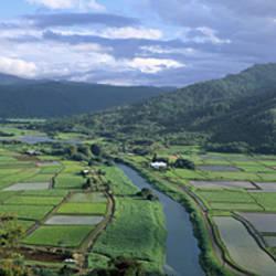 Rice Fields, Hanalei Valley, Kauai, Hawaii, USA
