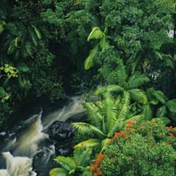 High angle view of a waterfall in a rainforest, Hamakua Coast, Hawaii, USA