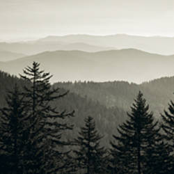Panoramic view of trees with a mountain range in the background, Great Smoky Mountains National Park, North Carolina, USA